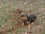 Caught Digging
