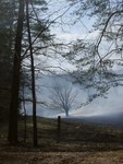 Cades Cove Fire