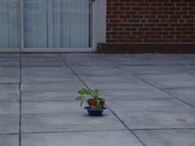 Plant on UC Balcony